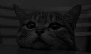 blog header cat